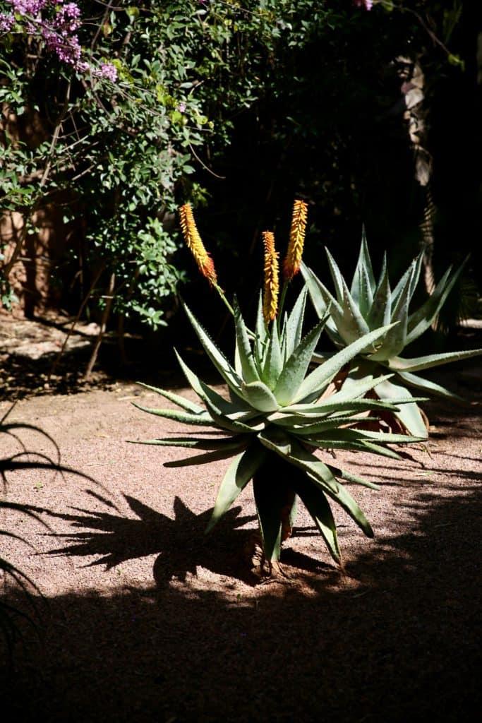 plantes exotiques Marrakech